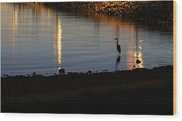 Wood Print featuring the photograph Night Fishing - A Great Blue Heron  by Jane Eleanor Nicholas
