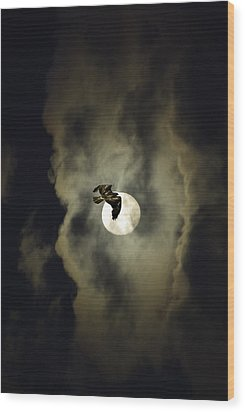 Night Hawk Wood Print