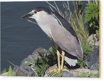 Night Heron Bird Wood Print by Diane Rada