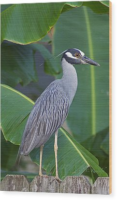 Night Heron Wood Print by Cheri Randolph