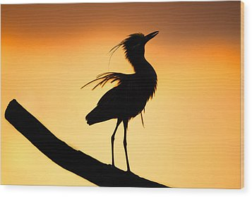 Night Heron Silhouette 2 Wood Print by Andres Leon