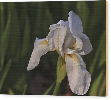 Night Iris Wood Print