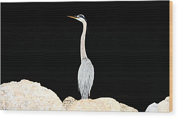 Night Of The Blue Heron  Wood Print