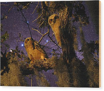 Night Owls Wood Print by Phil Penne