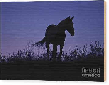 Nights Of Freedom Wood Print by Kate Purdy