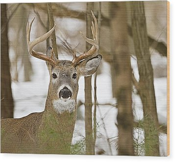 Nine Point White Tailed Buck Wood Print by John Vose