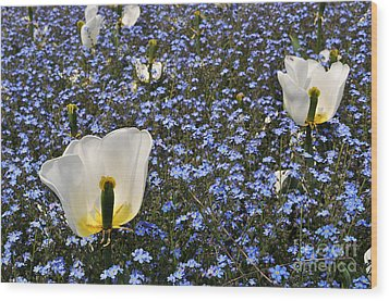 Wood Print featuring the photograph No More Tulips by Simona Ghidini