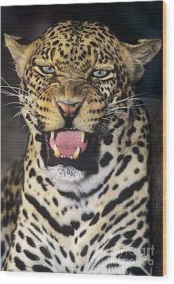 No Solicitors African Leopard Endangered Species Wildlife Rescue Wood Print