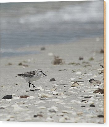 Nokomis Beach Piper Wood Print