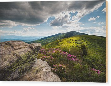North Carolina Blue Ridge Mountains Roan Rhododendron Flowers Nc Wood Print