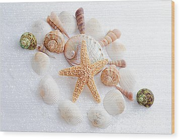 North Carolina Sea Shells Wood Print by Andee Design