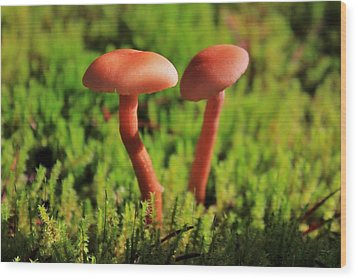 North Cascades Mushrooms Wood Print by Benjamin Yeager