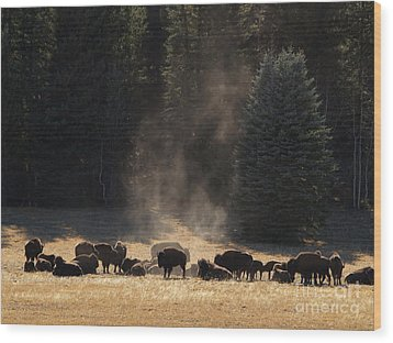 North Rim Bison Of The Grand Canyon Wood Print by Alex Cassels