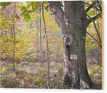 North Woods Guardian Wood Print by Mary Lee Dereske