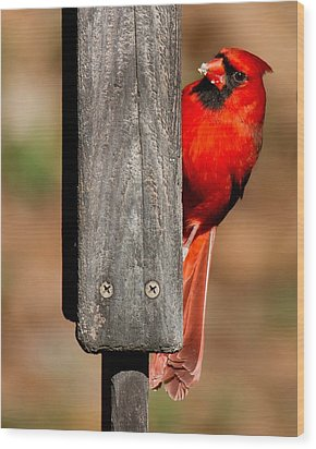 Wood Print featuring the photograph Northern Cardinal by Robert L Jackson