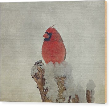 Northern Cardinal Wood Print by Sandy Keeton