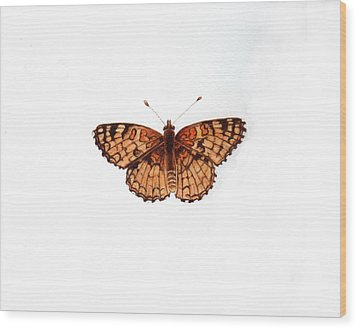 Northern Checkerspot Butterfly Wood Print by Inger Hutton