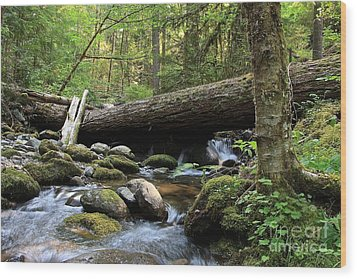 Northern Creek Wood Print by Tim Rice