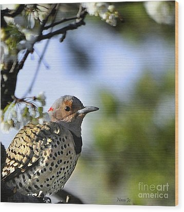 Northern Flicker Woodpecker Wood Print by Nava Thompson
