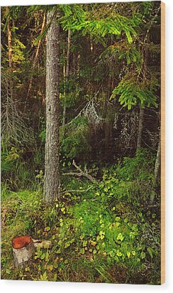 Northern Forest 1 Wood Print by Jenny Rainbow