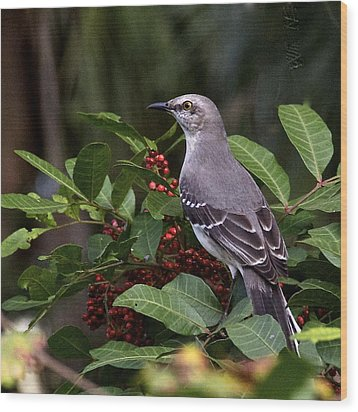 Northern Mocking Bird Wood Print