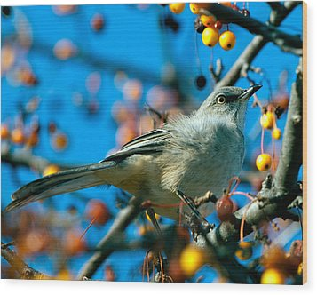 Northern Mockingbird Wood Print by Bob Orsillo