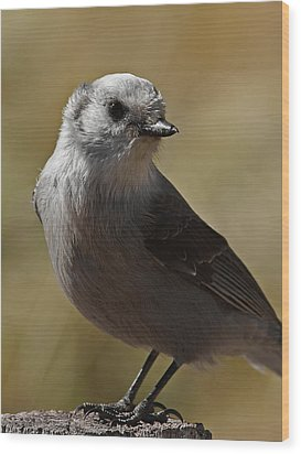 Northern Mockingbird Wood Print by Ernie Echols
