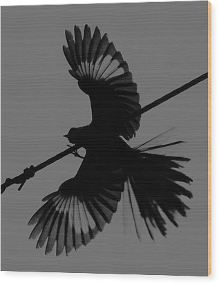 Wood Print featuring the photograph Northern Mockingbird by Leticia Latocki