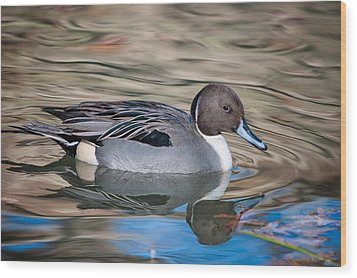 Wood Print featuring the photograph Northern Pintail by Tyson and Kathy Smith