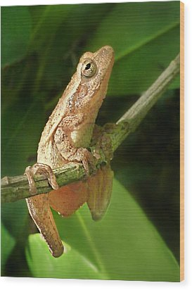 Northern Spring Peeper Wood Print by William Tanneberger