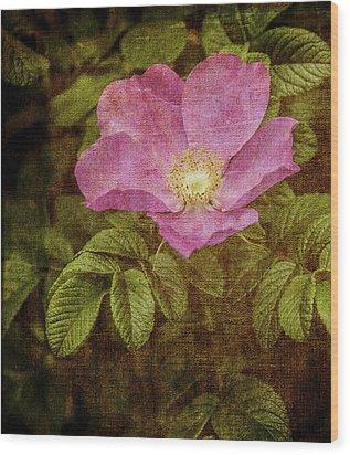 Nostalgic Rose Wood Print by Karen Stephenson
