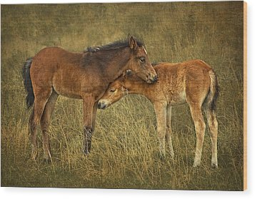 Not So Wild Wild Horses Wood Print by Priscilla Burgers