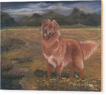 Nova Scotia Duck Tolling Retriever Wood Print