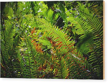 Wood Print featuring the photograph November Ferns by Adria Trail