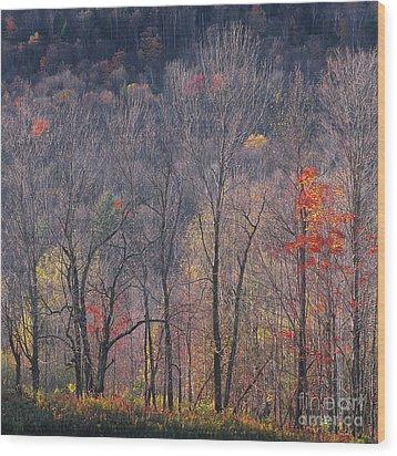 November Woods Wood Print