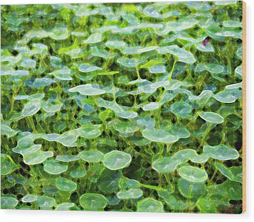 Nuanced Nasturtium Wood Print by Joe Schofield