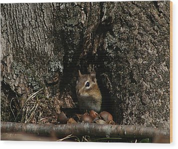 Nut Therapy  Wood Print by Neal Eslinger