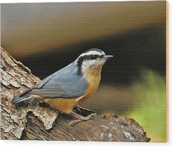 Wood Print featuring the photograph Nuthatch Pose by VLee Watson