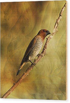 Nutmeg Mannikin Aka Spice Finch Wood Print by Angela A Stanton