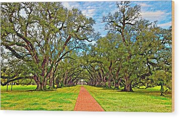 Oak Alley 3 Oil Wood Print by Steve Harrington