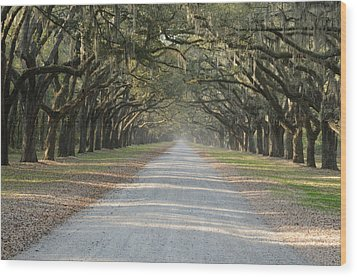 Wood Print featuring the photograph Oak Avenue by Bradford Martin
