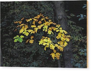 Oak Cluster Wood Print