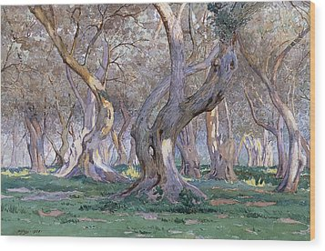 Oak Grove Wood Print by Gunnar Widforss