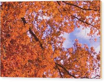Wood Print featuring the photograph Oak In Evening Sun by Denise Beverly