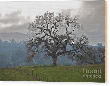 Oak In Fog Wood Print