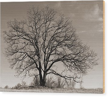 Wood Print featuring the photograph Oak In Sepia by Lula Adams
