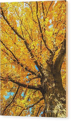 Wood Print featuring the photograph Oak In The Fall by Mike Ste Marie