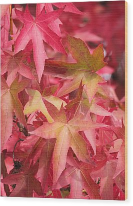 Wood Print featuring the photograph Oak Leaves In The Fall by E Faithe Lester