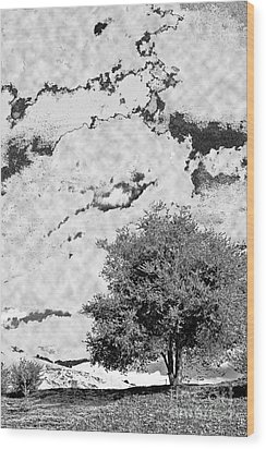 Oak On A Hill Blk And Wht Wood Print by Gary Brandes
