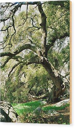 Wood Print featuring the photograph Oak Spirit by Kathy Bassett